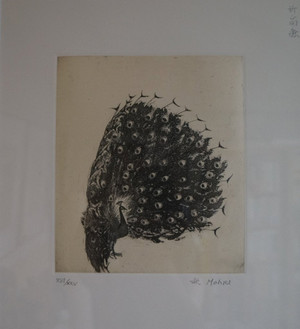 Sdsc04251